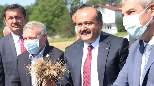 Tarım ve Orman Bakan Yardımcısı Metin, Taşköprüde sarımsak hasadına katıldı