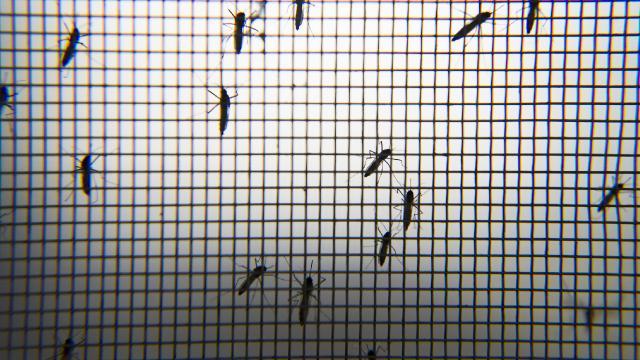 Hindistanda 14 kişide Zika virüsü görüldü