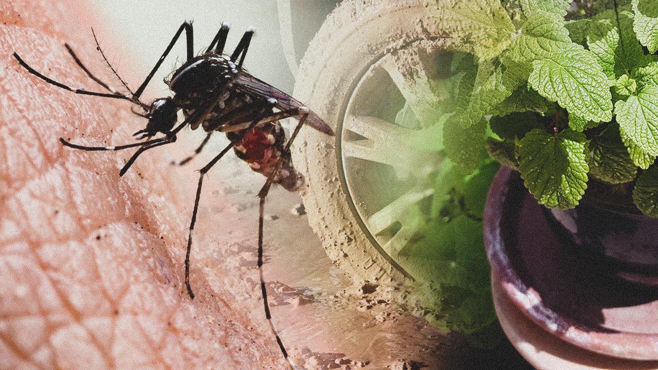 Karadenizde yeni tehlike: Asya Kaplan Sivrisineği