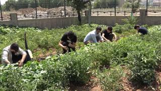 Okul bahçesinde bostan kurup, ihtiyaç sahiplerine ulaştırıyorlar