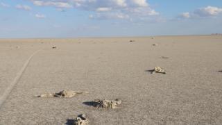 Tuz Gölü'ndeki flamingo ölümlerine soruşturma