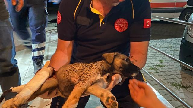 Afyonkarahisarda 112 ekibi, yaralı köpeğin yardımına koştu