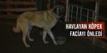 Havlayan köpek faciayı önledi