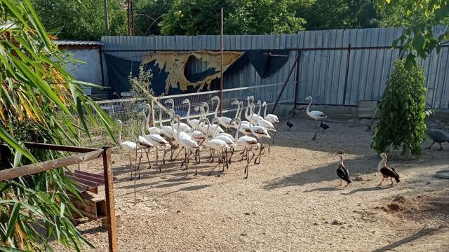 Antalyada kanatları kesilmiş 32 yavru flamingo bulundu