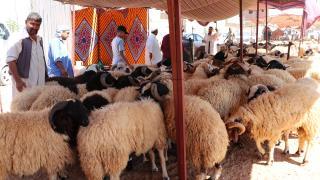 Libya'da ekonomik sıkıntılar kurbanlık piyasasını da etkiliyor