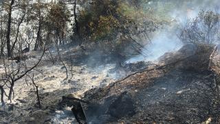 Bilecik'te çıkan orman yangını kontrol altına alındı