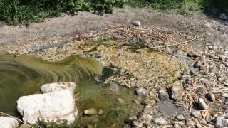 Asi Nehri'ndeki balık ölümleri araştırılıyor