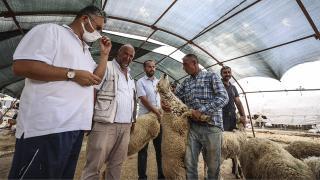 Hayvan pazarlarında kurban satışı sürüyor