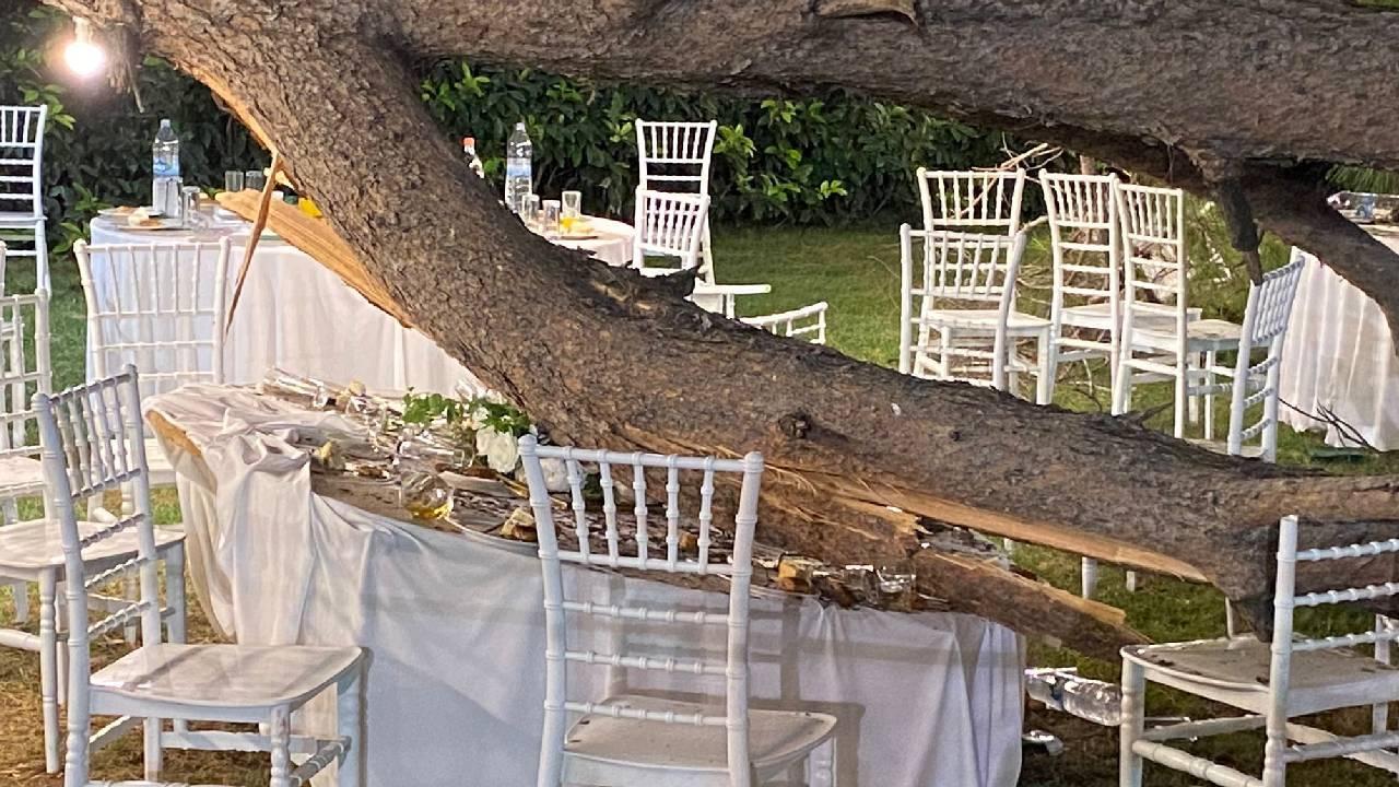 Düğün sırasında ağaç devrildi: 1 ölü, 9 yaralı