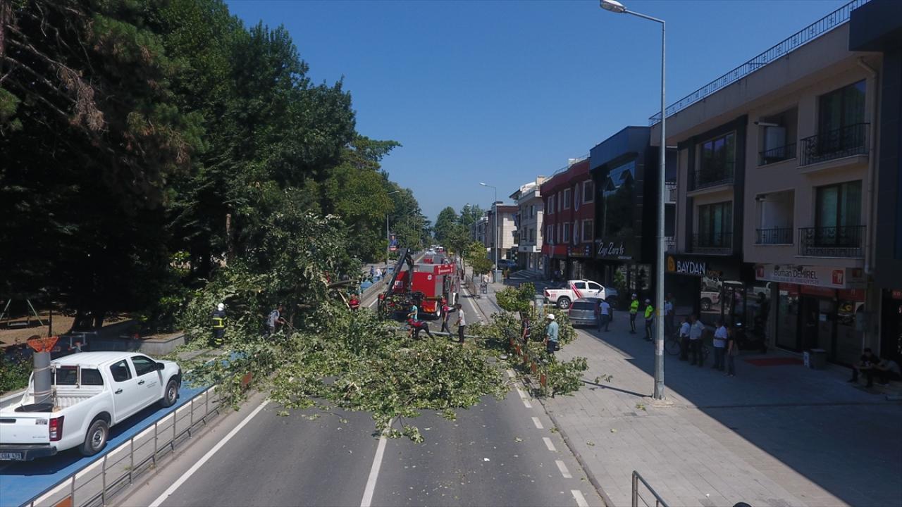 Düzce'de asırlık ağaç caddeye devrildi