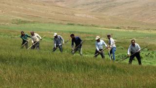 Çiftçilerin asırlık tırpanlarla zorlu ot biçme mesaisi