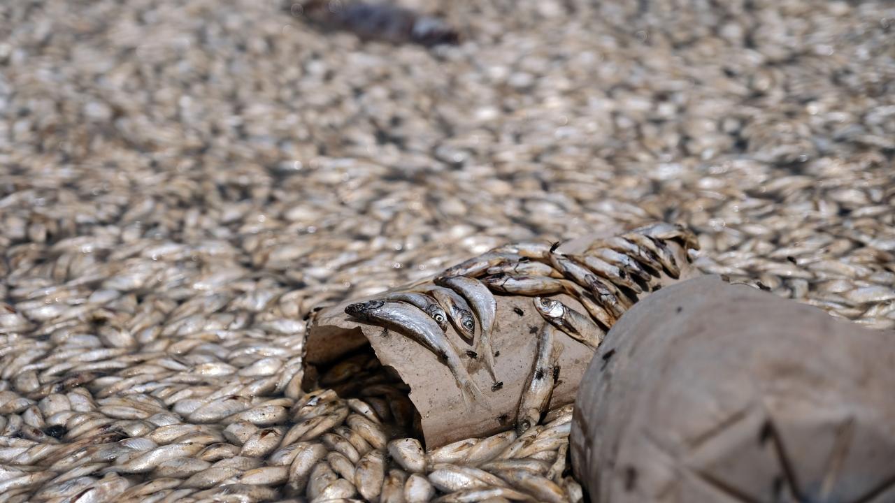 May Barajı'nda kuraklık: Binlerce balık telef oldu