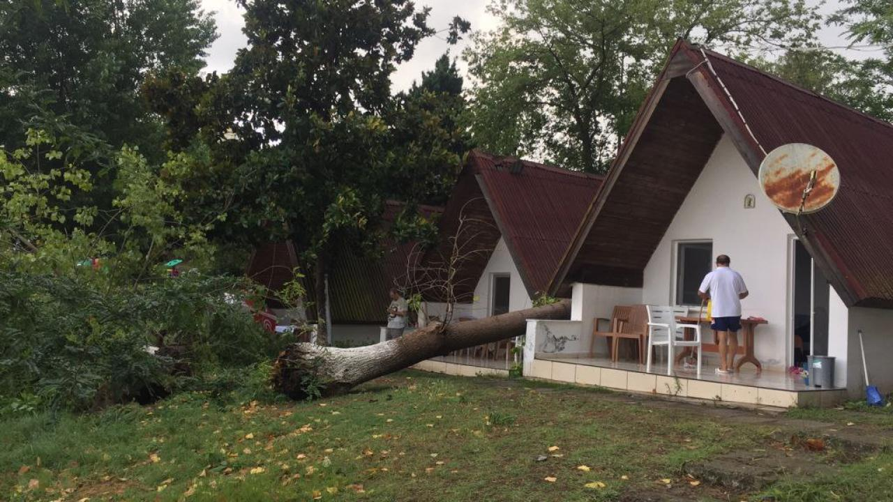 Sinop'ta hortum ağaçları devirdi