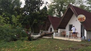 Sinop'ta hortum: Ağaçlar devrildi