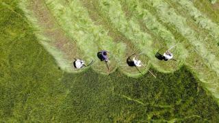 Çiftçilerin asırlık tırpanlarla zorlu ot biçme mesaisi başladı