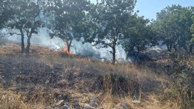Çanakkalede orman yangını: 10 hektar alan zarar gördü