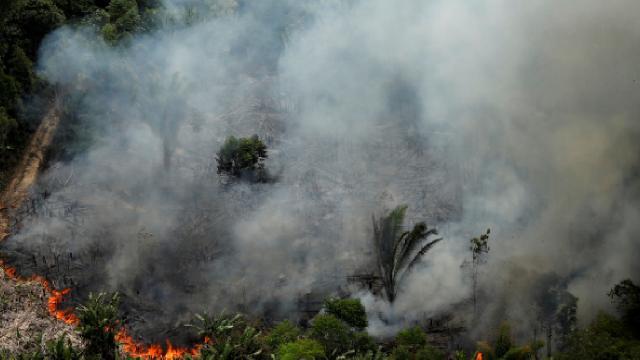 """Amazonlarda """"ormansızlaşma"""" tehdidi"""