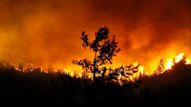 Cumhurbaşkanı Erdoğan yangın bölgesine gidiyor - Son Dakika Haberleri