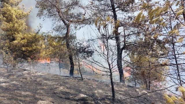 Hatayda orman yangını: Havadan ve karadan müdahale sürüyor