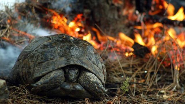 Orman yangınlarında hayvanlara ilk yardım nasıl olmalı?