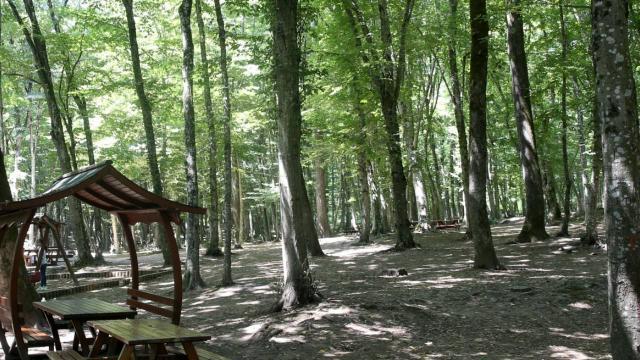 Tuncelide ormanlık alanlara giriş çıkışlar 30 gün yasaklandı