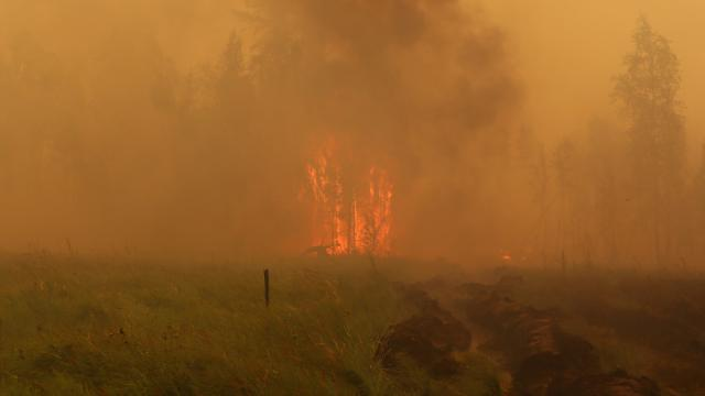 Rusyanın doğusunda orman yangınları sürüyor