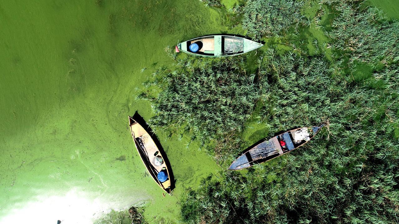 Uluabat Gölü yeşile büründü