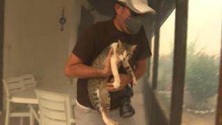 Yangında evin balkonunda mahsur kalan kediyi gazeteciler kurtardı