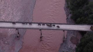 """Çin'de """"fil"""" alarmı: 150 binden fazla kişi tahliye edildi"""
