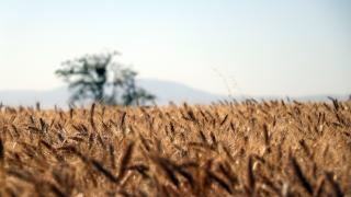 Tarımsal girdi fiyat endeksinde artış