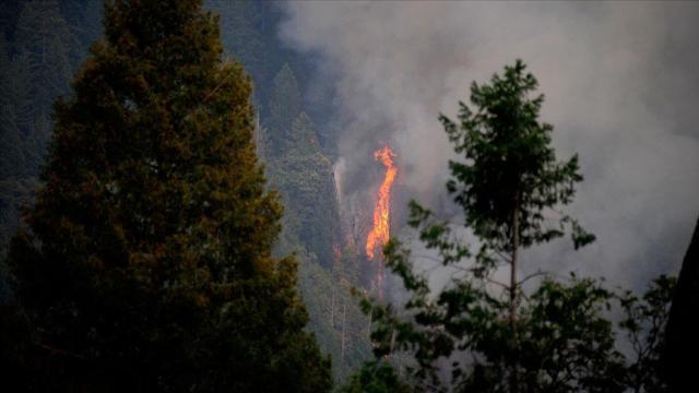 Californiyadaki yangınlar için büyük afet ilanı talep edildi