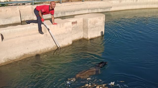 Sulama kanalında düşen köpek kurtarıldı