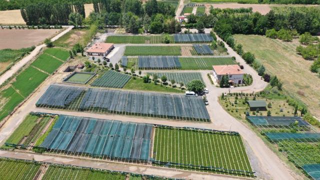 Yeşil vatan için 273 milyon fidan üretildi