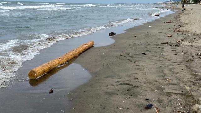 Sinopta selin denize sürüklediği tomruklardan onlarcası komşu il Samsunda sahile vurdu