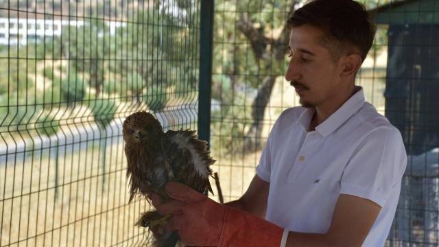 Şırnakta yaralı bulunan ve tedavisi tamamlanan kuşlar doğaya bırakıldı