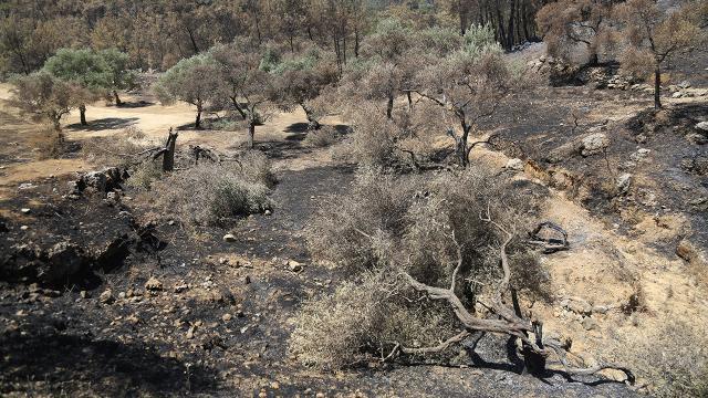Yangınlardan zarar gören üreticilere 9,5 milyon lira ödeme yapıldı