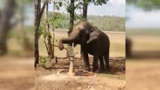 Tulumbadan su içen fil gündem oldu