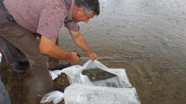 Kırklarelinde 23 gölete 164 bin 459 balık yavrusu bırakıldı