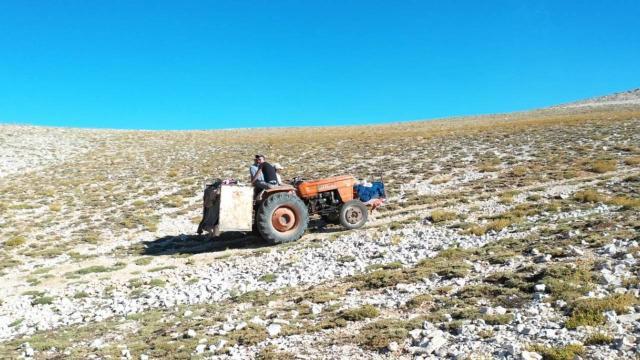 2 bin 500 rakımlı dağdan karın şehre zorlu yolculuğu
