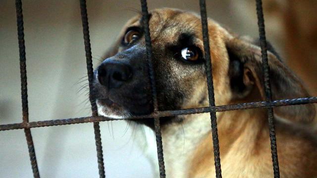 Güney Korede köpek eti yasağı gündemde