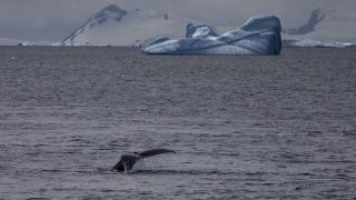 Türk akademisyenlerden Antarktika'da araştırma