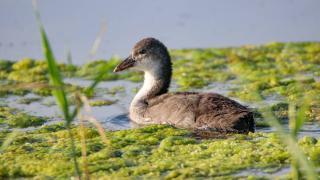 Kızılırmak Deltası'nda 87 kuş türü tespit edildi