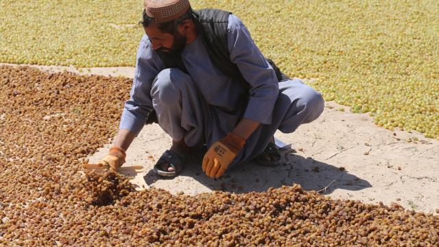 BM: Afganistanda 14 milyon kişinin gıda güvenliği yok