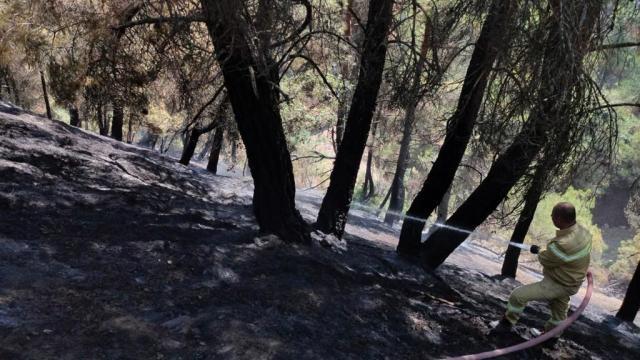 Uşakta çıkan orman yangını söndürüldü