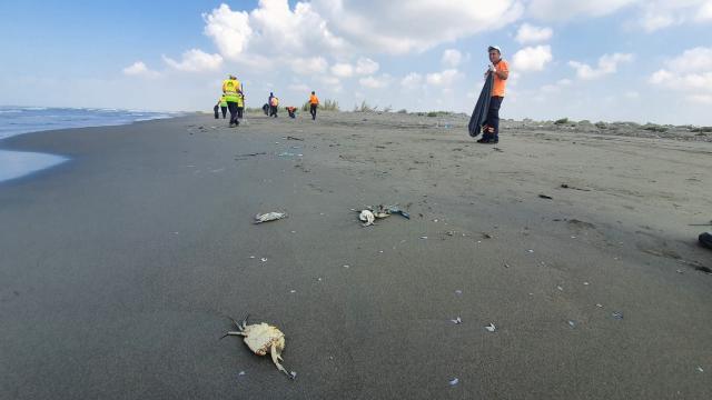 Mersinde, Suriye kaynaklı petrol sızıntısına ilişkin temizlik çalışması başlatıldı