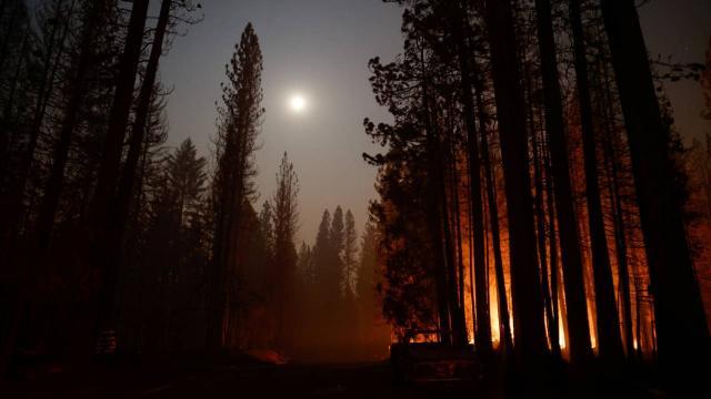 ABDdeki yangınlar: Dünyanın en büyük ağaçları tehdit altında