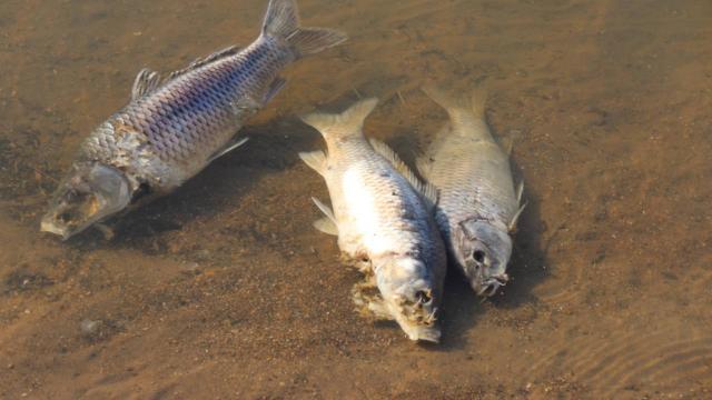 Vanda artan balık ölümleri inceleniyor