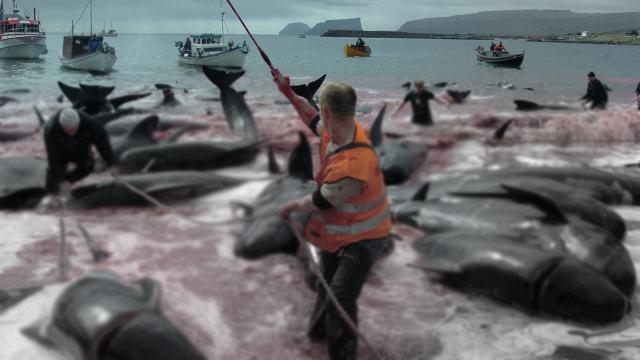 Hayvan hakları savunucusu tepki çeken yunus ve balina katliamını anlattı