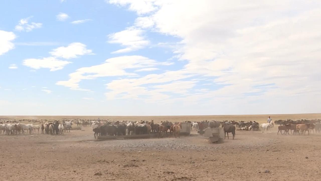 Kazakistan'da göçebe hayat: At çobanları