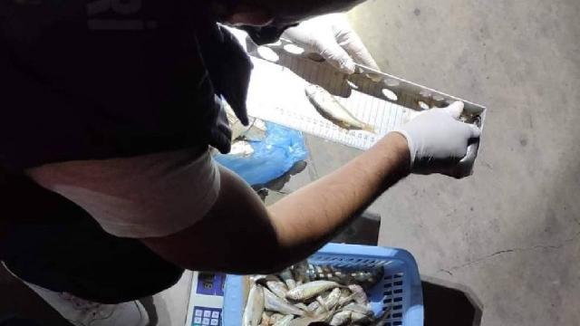 Düzcede usulsüz avlanan 602 kilogram balığa el konuldu